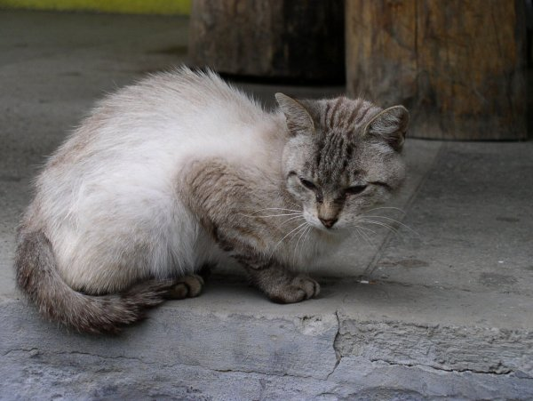 Услуга «кот на час» сделала популярным японский отель