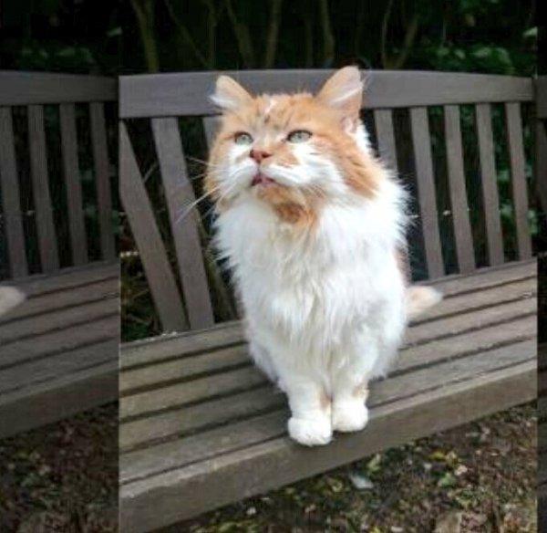 Самой старой кошке-рекордсменке исполнилось 30 лет
