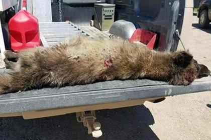 Мертвого загадочного зверя из США идентифицировали по ДНК