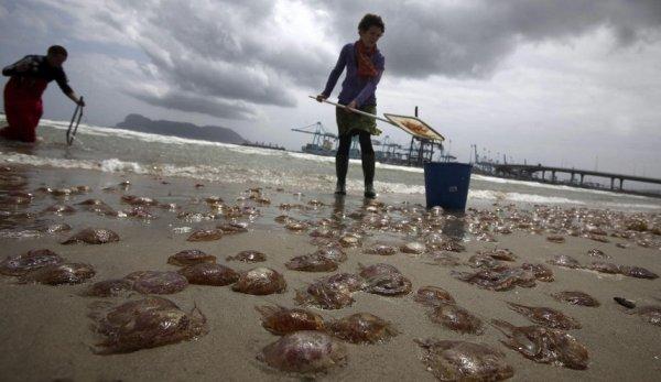 Огромные медузы