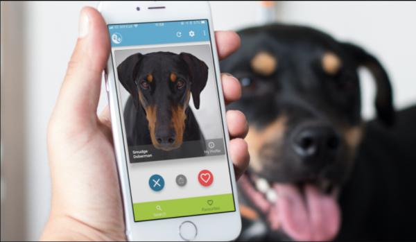 В Сети появится Tinder для бездомных собак и кошек