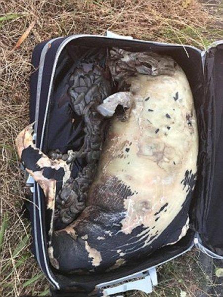 В Британии на автостоянке обнаружили мертвого бурого дельфина в чемодане