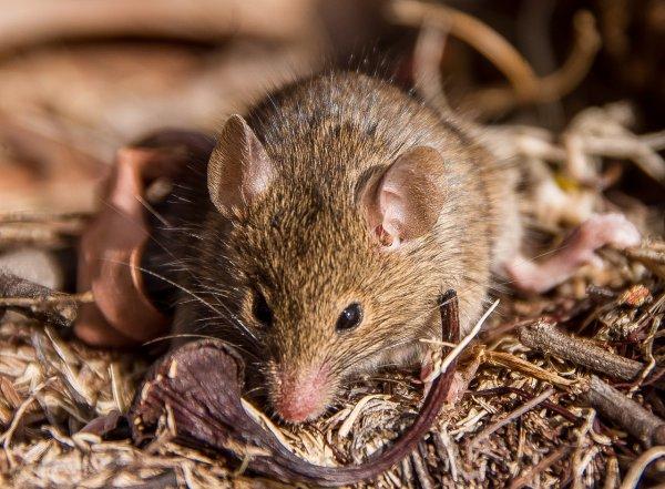 В супермаркете Ростова сняли на камеру беззаботную возню мышей возле макарон