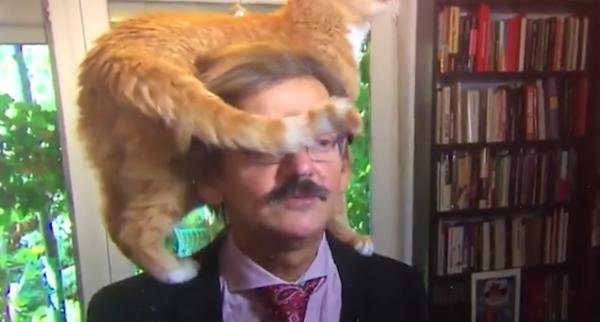 Ласковый кот выступил против снижения  пенсионного возраста для судей в Польше