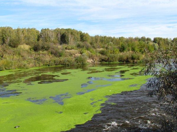 Ростовские водопроводчики придумали, как лишить воду неприятного запаха