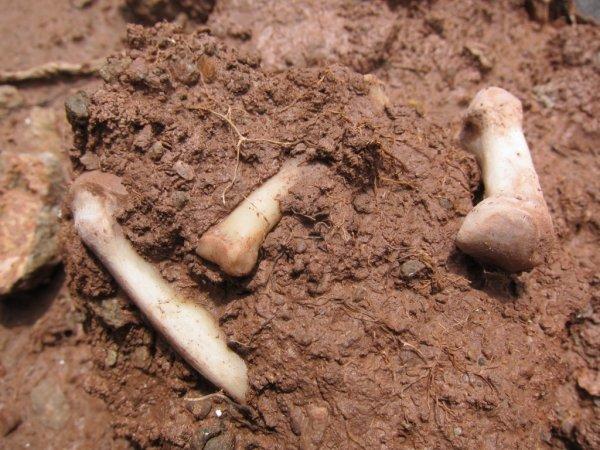 В Польше под детской площадкой обнаружили захоронение с 80 тысячами скелетов