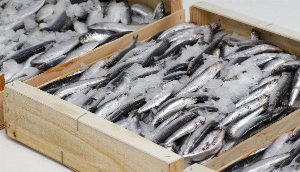 Хранение и транспортировка живой рыбы