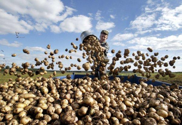 «Помог чем смог»: Картофельные миномёты Лукашенко помогут Путину завоевать Азов?