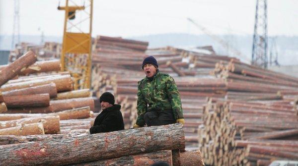 «Кожемяко, спаси!»: учёные Владивостока требуют остановить вырубку лесов китайцами