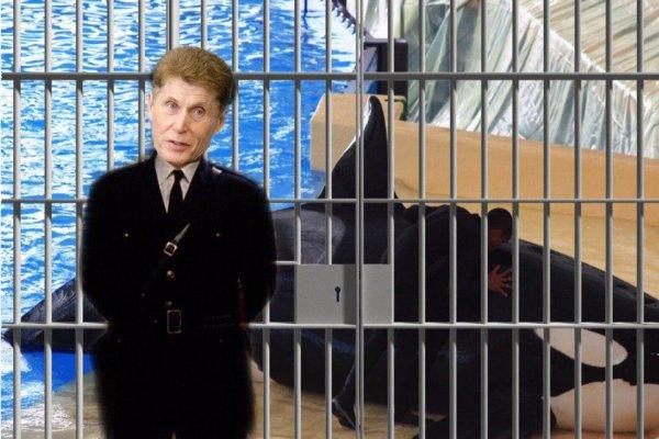«Кожемяко не отпустит»: Губернатор Приморья не планирует выпускать касаток из «китовой тюрьмы»