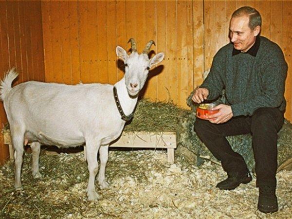 Путинский козёл отпущения: Медведева «разнесли» после отчёта в Госдуме
