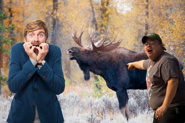 Лосиный гон в ноябре: чего стоит опасаться при встрече с животным