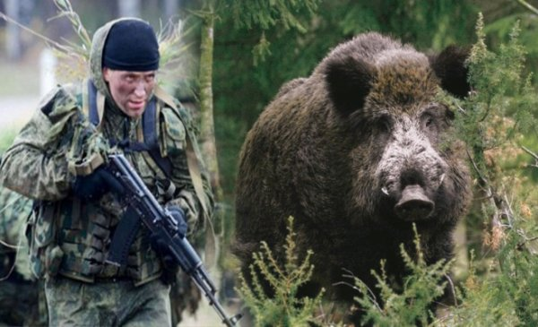 «Не сесть на клыка» или секреты «успешной» охоты на кабана от полковника ФСБ