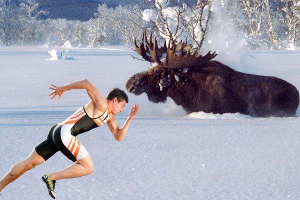 «Чтобы зимой охотиться на лося – тренируйте выносливость осенью» - промысловик